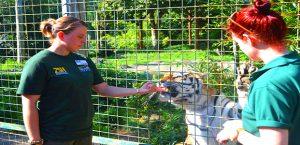 Wildlife Park Harlow Zoo Animal Park