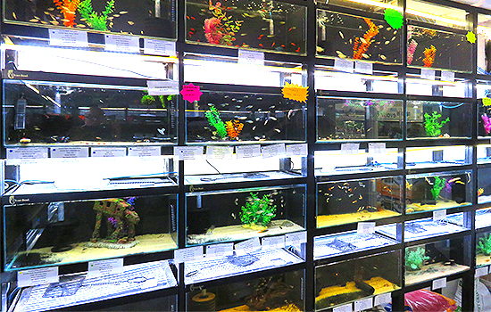 Lee Valley Aquatic Shop Harlow Tropical Fish Pond Equipment