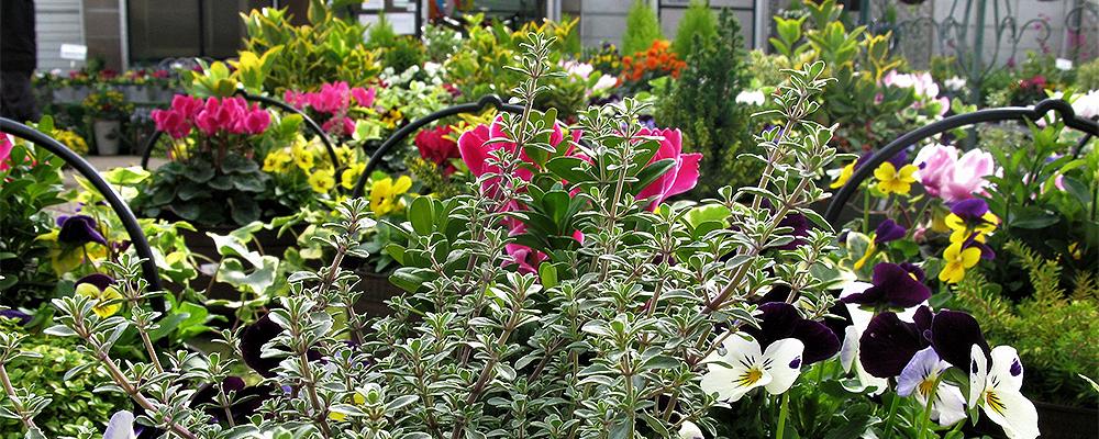 Tyndalls Garden Centre