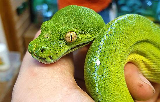Reptile Shop Harlow Exotic Animals Pet Food