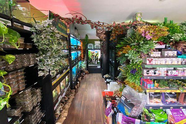 Krayzee-Chamz-Reptile-Centre-Reptiles-Geckos-Bearded-Dragon-Livefood-Reptile-Equipment-Reptile-Pet-Shop-Harlow-Essex