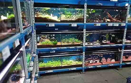 Friendly-Fish-Aqautics-Tropical-Fish-Harlow-Pond-Fish-Fish-Tanks-Tropical-Fish-Shop-Tropical-Fish-For-Sale-Essex